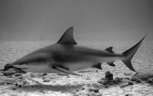 ~Way Down Deep~ Shark Role Play! 7-bull14