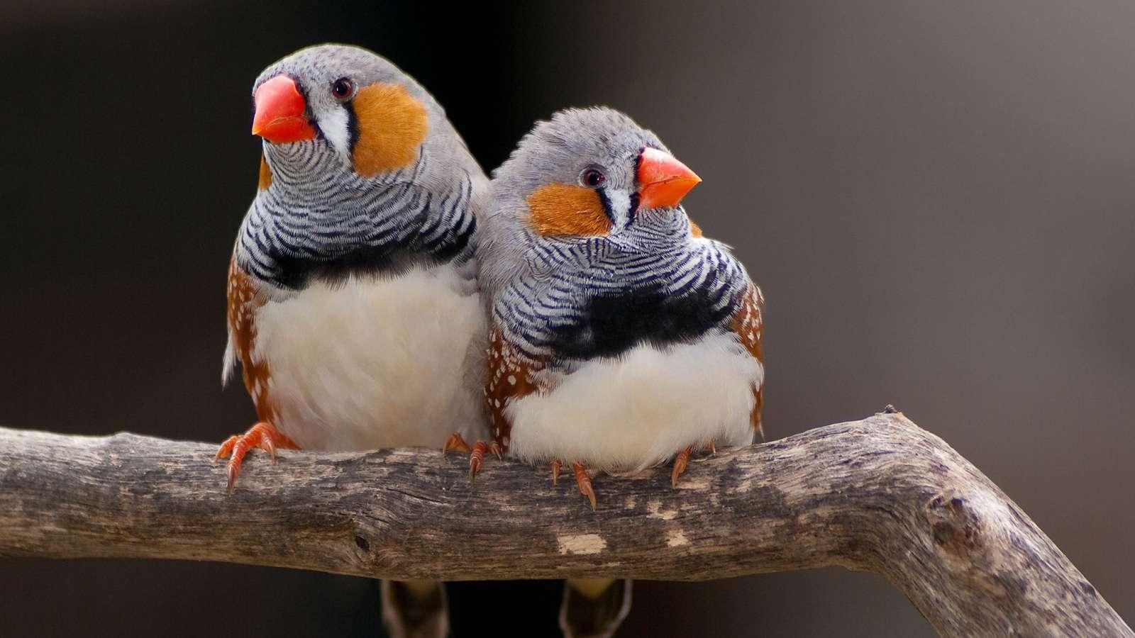 Hobby dos pássaros exóticos