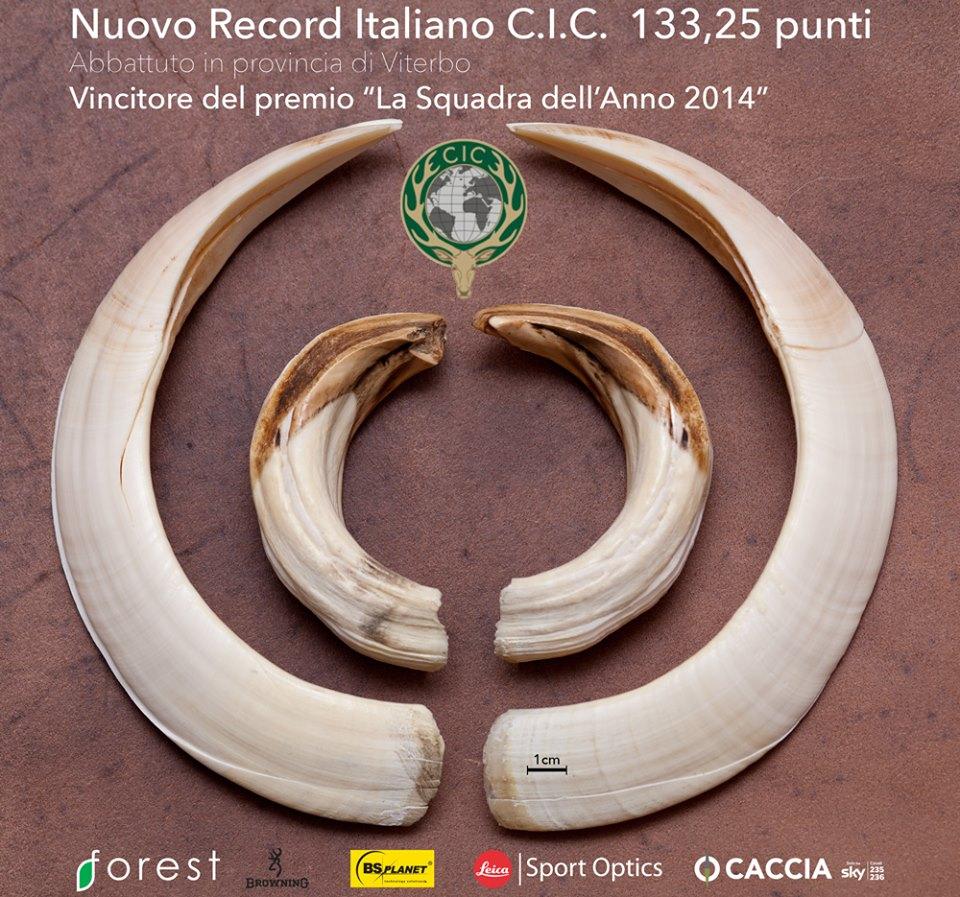 Cinghiale- nuovo record Italiano 10685413
