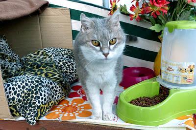 Gentil chat cherche panier retraite pour finir sa petite vie /15 P1100211