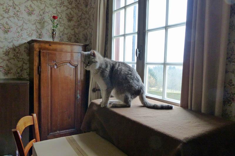 Gentil chat cherche panier retraite pour finir sa petite vie /15 P1100213