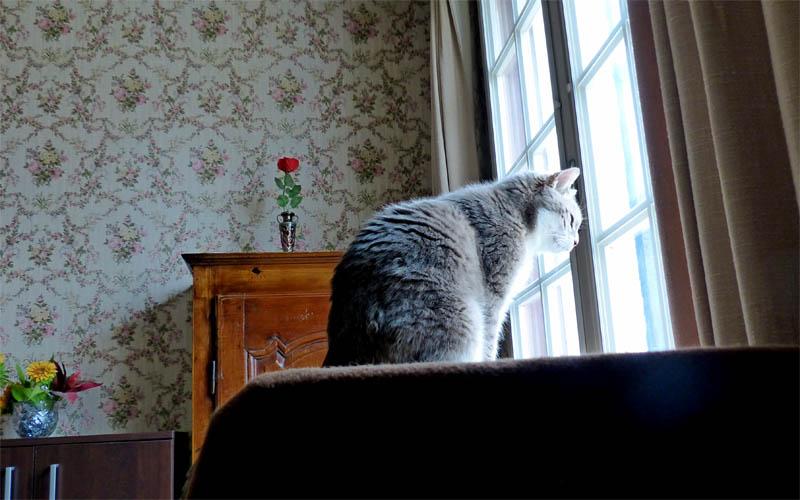 Gentil chat cherche panier retraite pour finir sa petite vie /15 P1100215