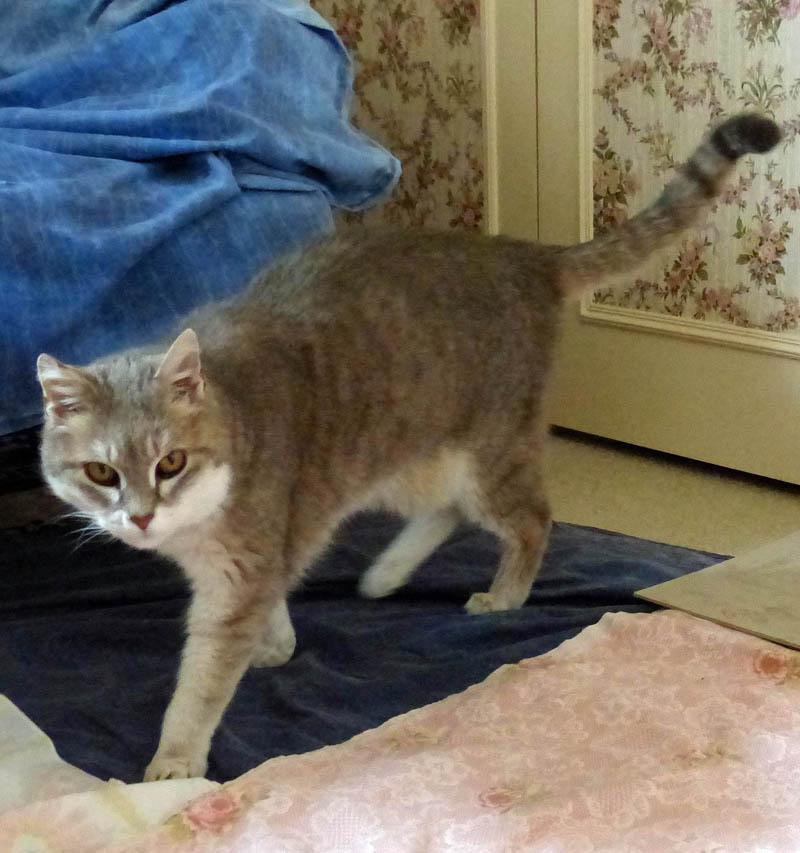Gentil chat cherche panier retraite pour finir sa petite vie /15 - Page 3 P1100222