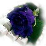 Апрель, тебе подарок от: филин Oeia10