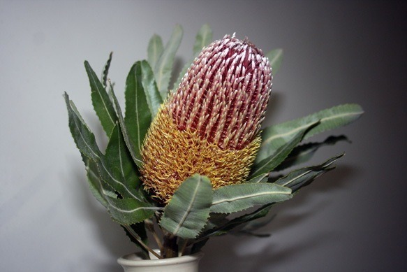 Painting banksia, any ideas? Banksi10