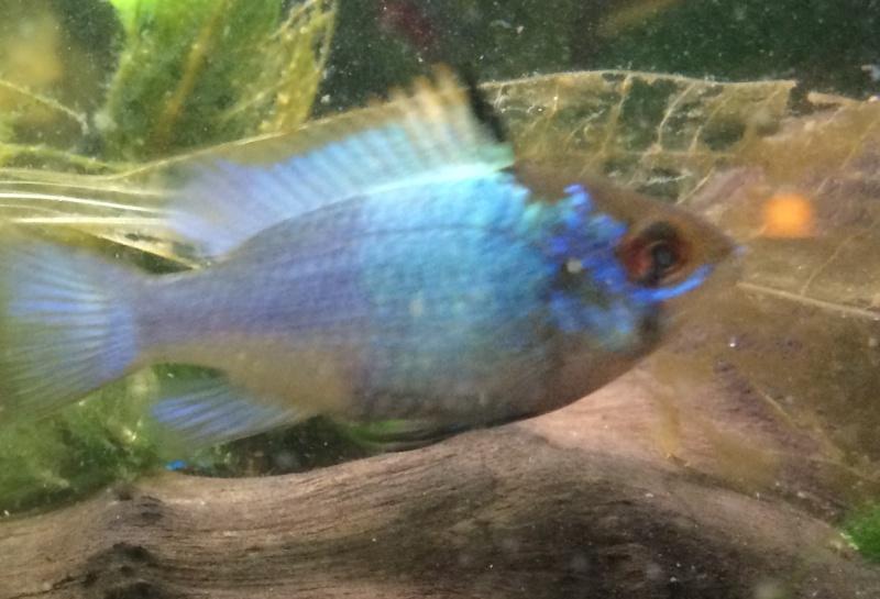 recherche poisson bleu Img_1712