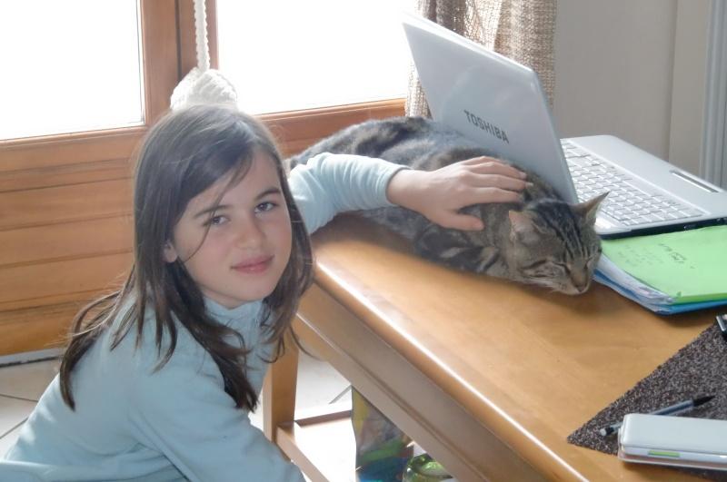 JEFF, chat européen tigré, né en 2014 Cimg3913