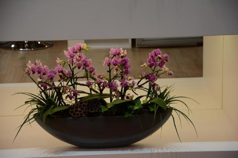 Orchideen auf der IPM Dsc_1310
