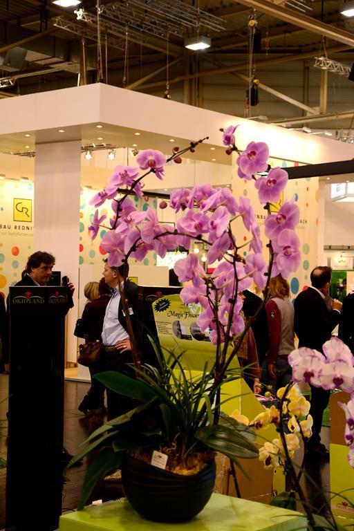 Orchideen auf der IPM Dsc_1311