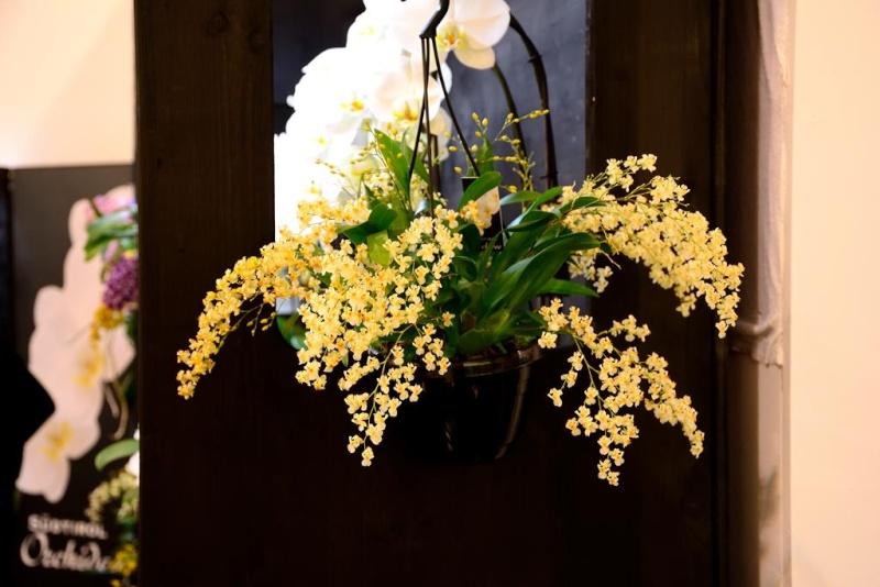 Orchideen auf der IPM Dsc_1312