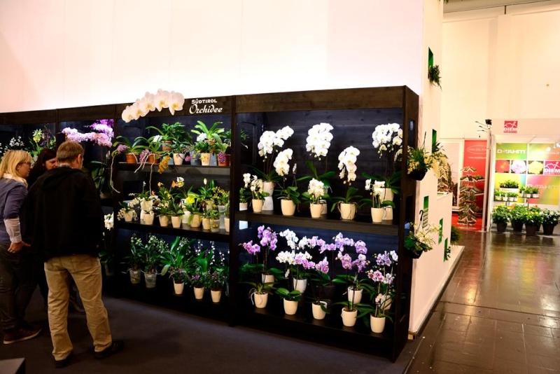 Orchideen auf der IPM Dsc_1313
