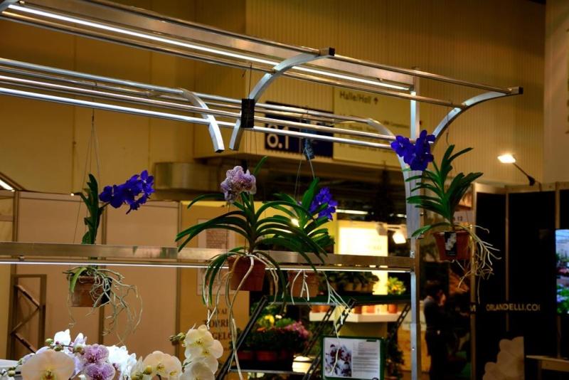 Orchideen auf der IPM Dsc_1315