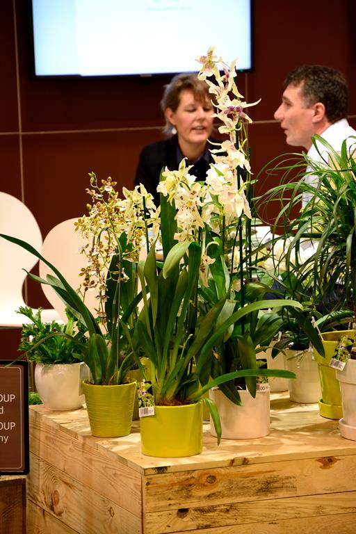 Orchideen auf der IPM Dsc_1411