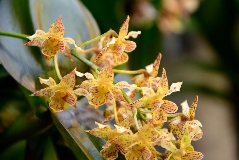 Orchideen auf der IPM Dsc_1417