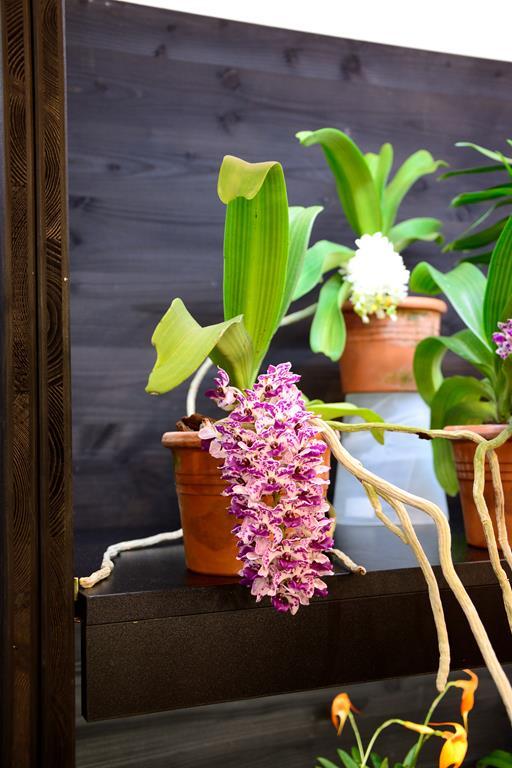 Orchideen auf der IPM Dsc_1419