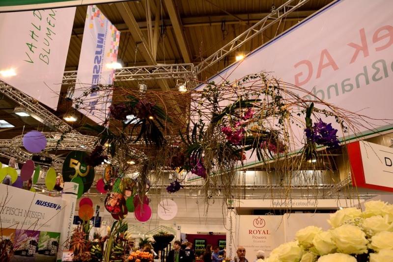 Orchideen auf der IPM Dsc_1420