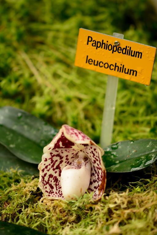 Orchideenschau Leipzig 28.02.2015 Dsc_1712