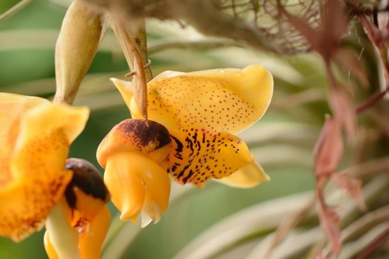 Orchideenschau Leipzig 28.02.2015 Dsc_1811
