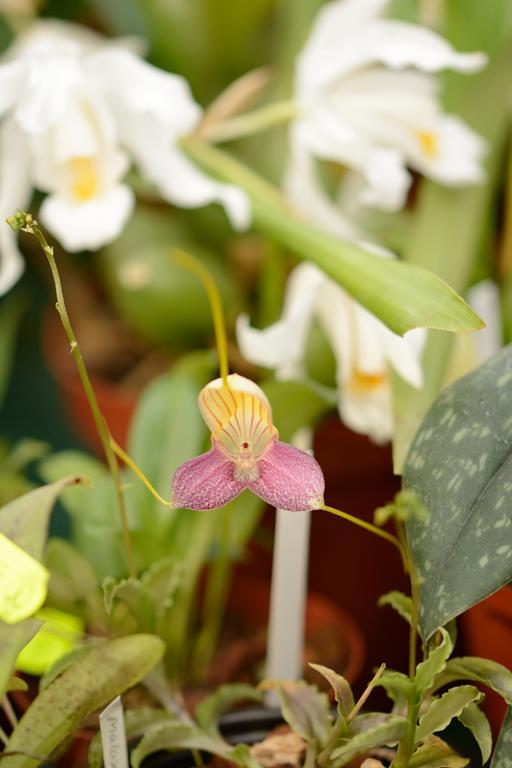Orchideenschau Leipzig 28.02.2015 Dsc_1814