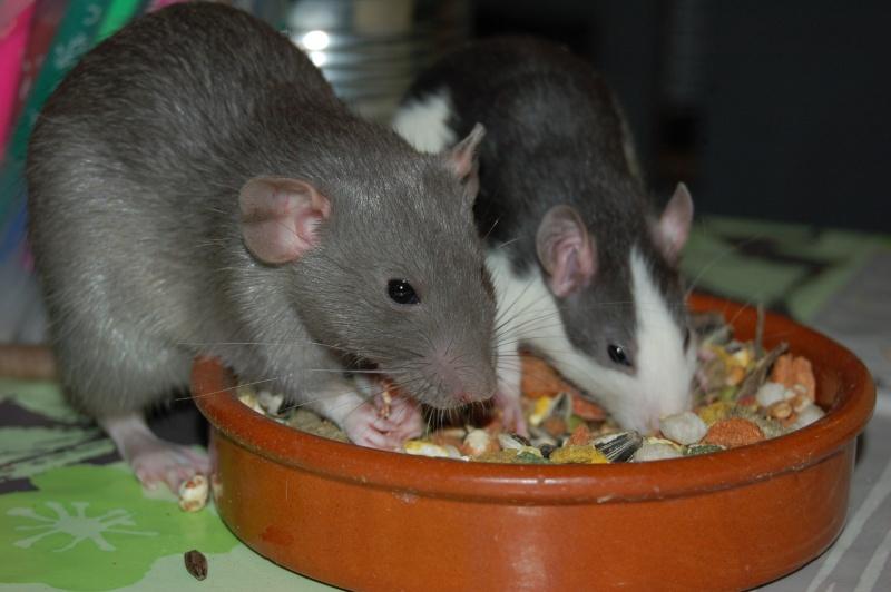 Mes p'tits trublions... Ratato10