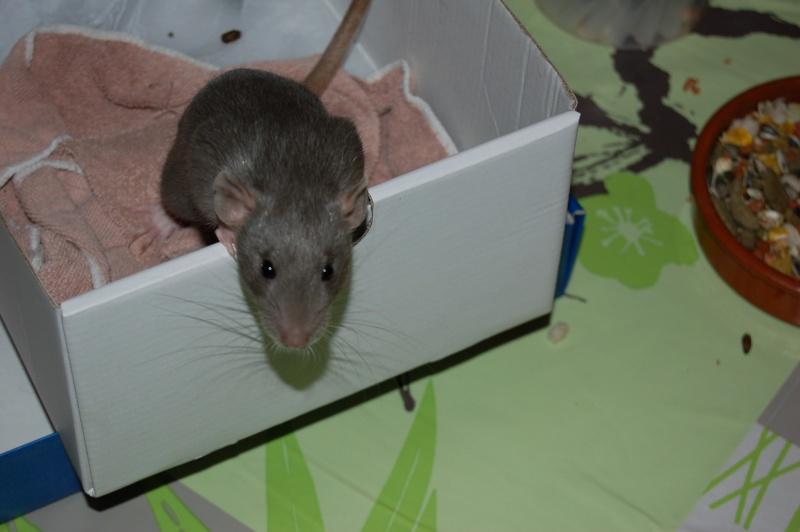 Mes p'tits trublions... Ratato12