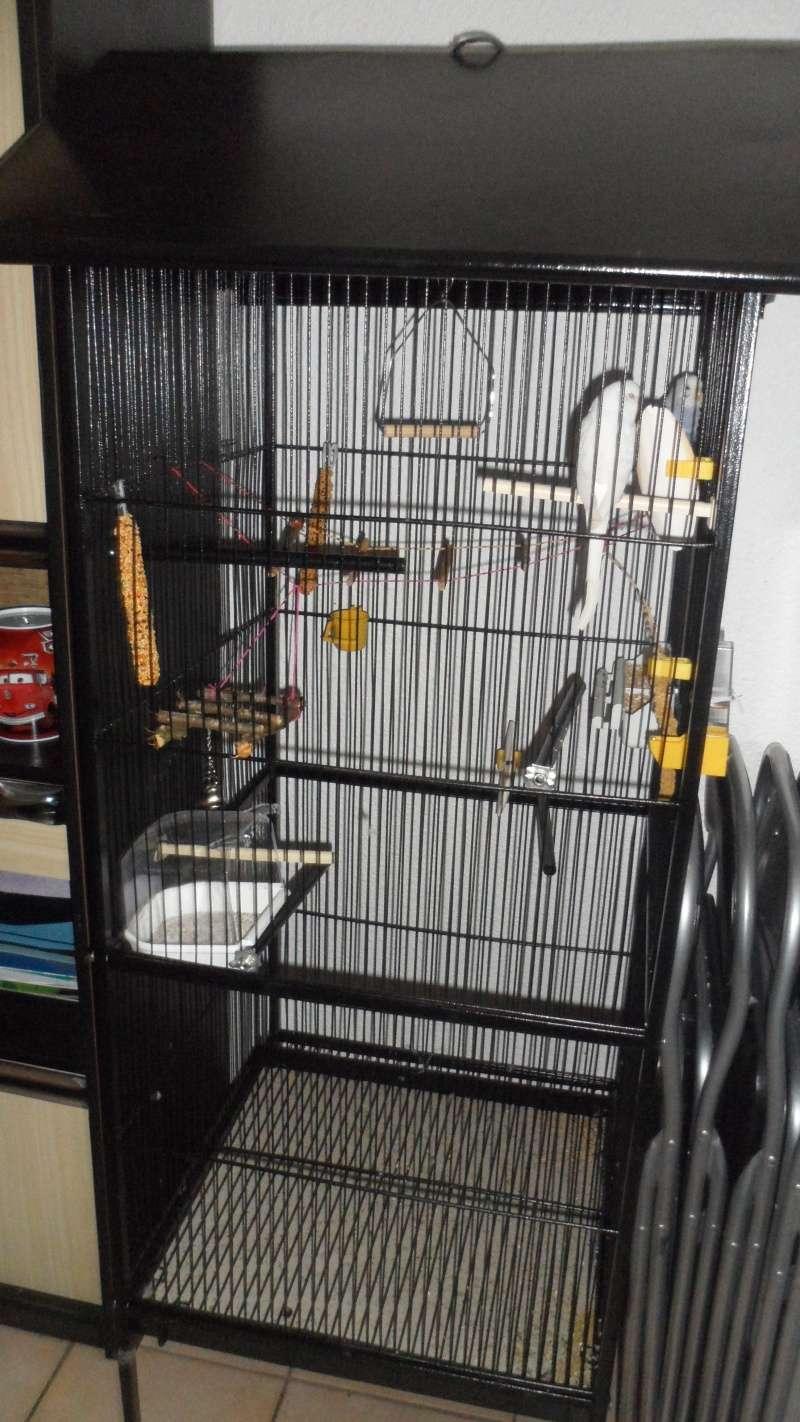 instalation de la nouvelle cage pour rocco et rita Sam_8213