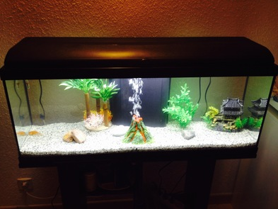 Aquarium 100 litres 9a9c1610