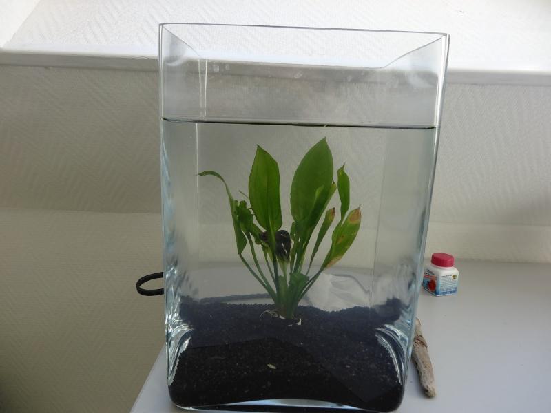 Aquarium un peu vide... Dsc03515