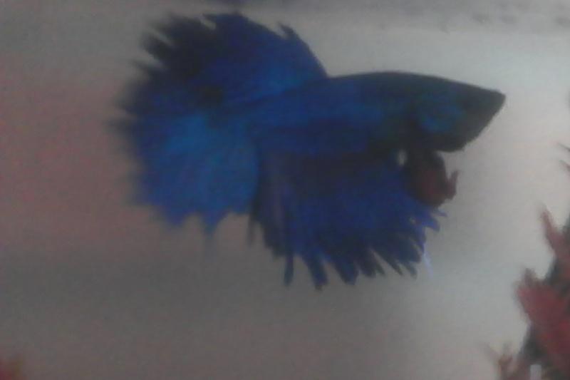 type de poisson Img_2012