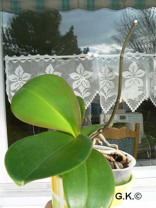 6 Orchideen, aber welche und wie pflege ich sie?? X_4-10
