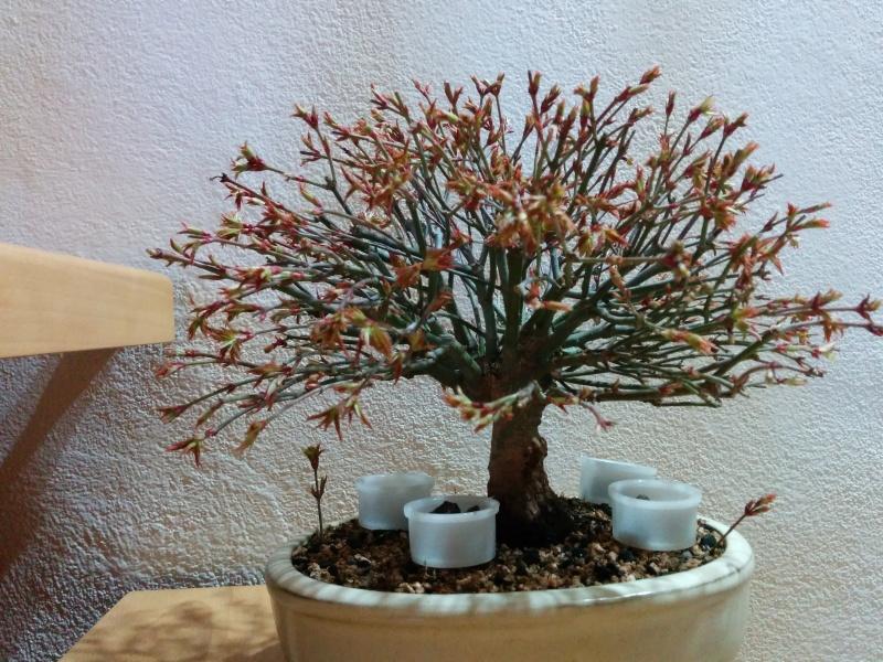 La nostra Primavera Img_2012