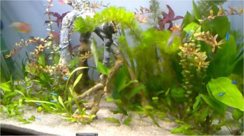 probleme de pousse de plantes Aquari11