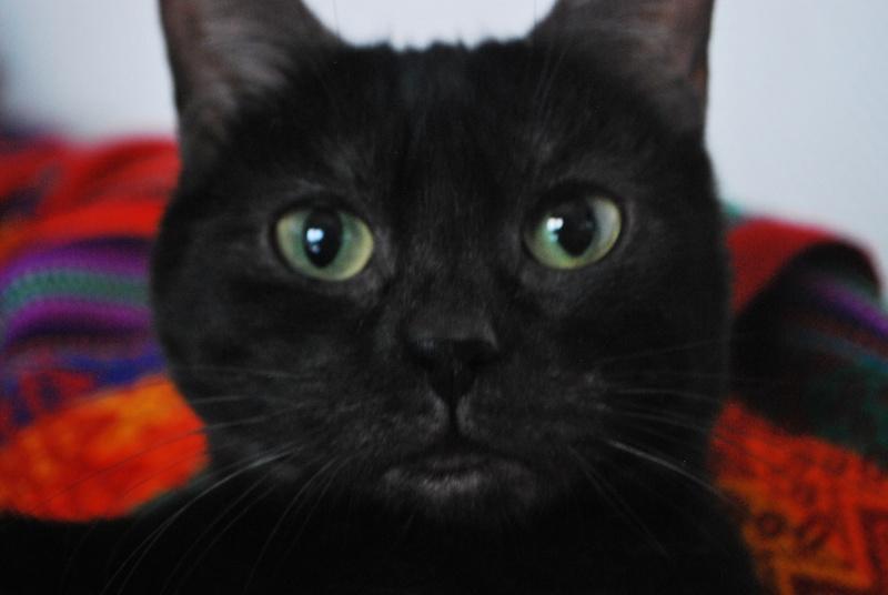 Jinny, femelle type européenne noire estimée née 01/04/2013 Dsc_1311