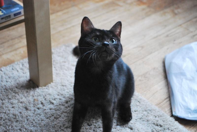 Jinny, femelle type européenne noire estimée née 01/04/2013 Dsc_1414
