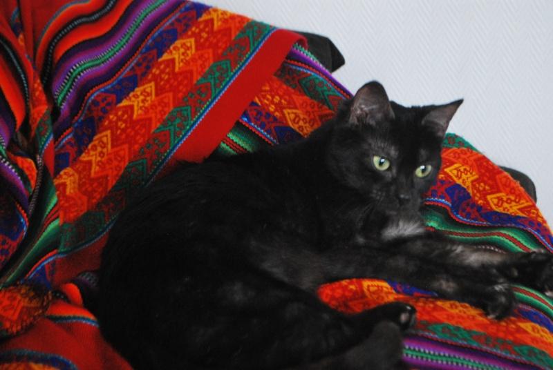 Jinny, femelle type européenne noire estimée née 01/04/2013 Dsc_1415