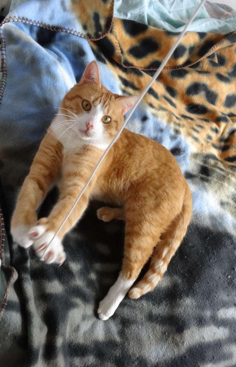 Nos positifs !! 45 amours de chats à adopter - Page 3 Dsc04216