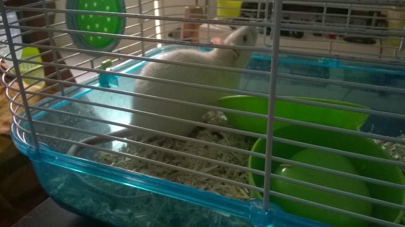 Besoin d'aide..HELP ! :( Rat11