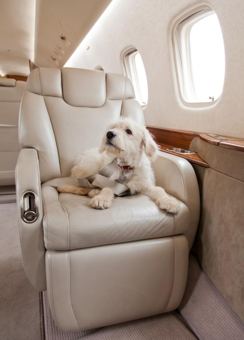 Voyager avec un animal de compagnie avec PrivateFly Jetpri10