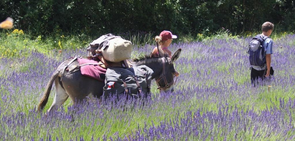 Slow tourisme : Randonner avec un âne, un formidable voyage  Randon10