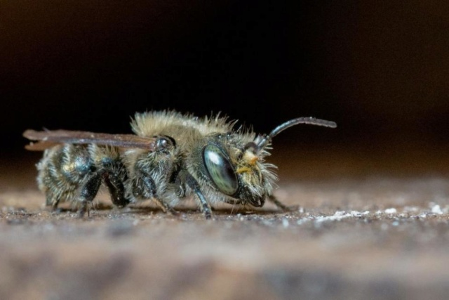Turkish bee ordered to be destroyed evades authorities in Britain 0c1e8e10