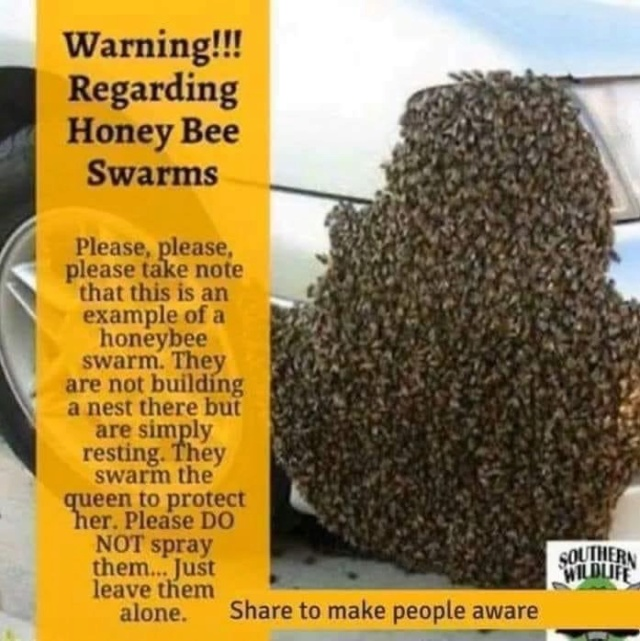 Bees dying everywhere! 66e4ad10