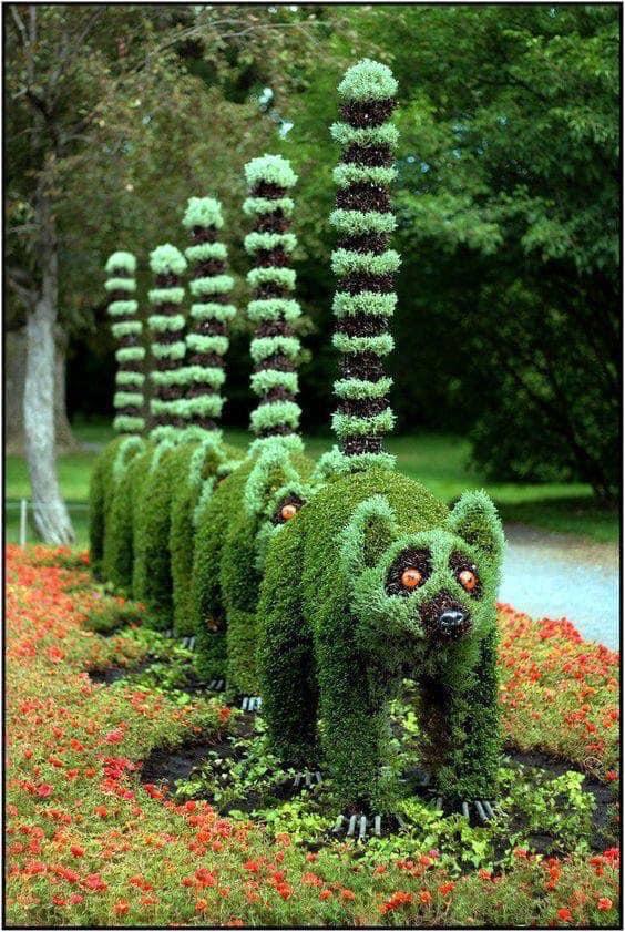 Look at my bush! Dd9e0e10