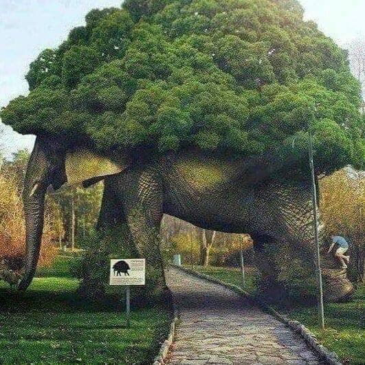 Look at my bush! F5f4bc10