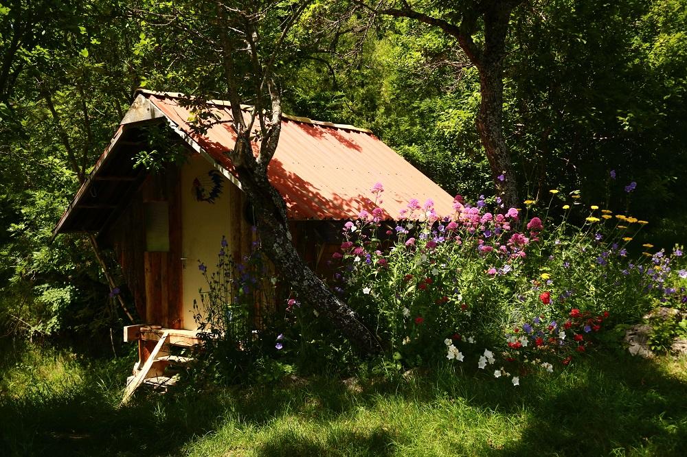 Le bosquet près de ma cabane. Img_4212