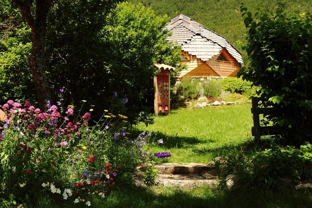 Le bosquet près de ma cabane. Img_4213