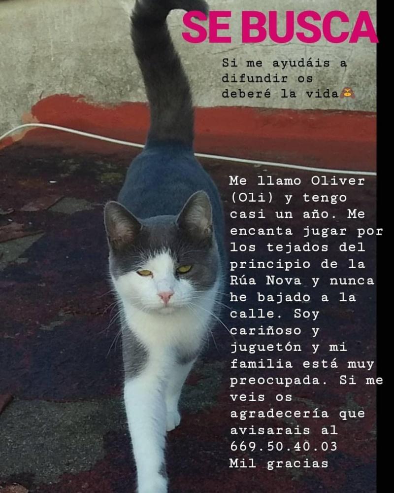 Gato perdido Betanzos. Apareció!! 0_img_12