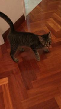 Gato encontrado zona Castrillón en A Coruña 1ba80210