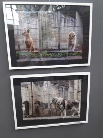 Exposición refugios de animales 20180910