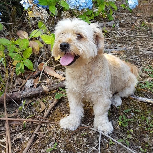 Perro perdido en Arteixo 20190814