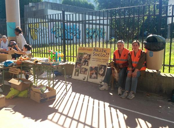 Mercadillo solidario CEIP de Prácticas de A Coruña a favor de Gatocan 21/06/2019 4_copi10
